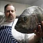 A growing number of chefs turn to so-called trash fish to create sustainable menus