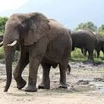 World Elephant Day: Facts, Conservation and Protection of the Endangered ...