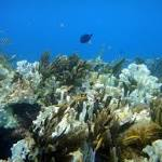'Doomed' Corals to Face Worst Bleaching in Decades
