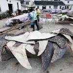 Investigation finds Chinese factory slaughters 600 whale sharks a year