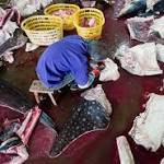"Slaughterhouse Said to Process ""Horrifying"" Number of Whale Sharks Annually"