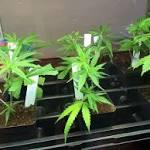 Survey: A majority of Americans favor pot legalization