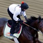 138th Preakness Stakes: Monzo's Preview, Predictions And Horses Worth Betting