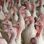 Avian flu in state threatens exports