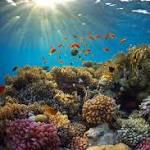 The connection between trade winds, coral and global warming