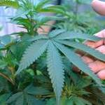 How The 'Cannabis Catch-22' Keeps Marijuana Classified As A Harmful Drug