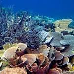 Plastic-eating corals make reefs especially vulnerable to pollution
