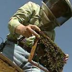 Beekeepers Sue EPA For Bee-Killing Pesticides