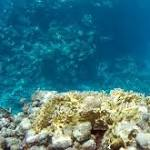 Coral findings confirm theory that ocean winds drive climate change