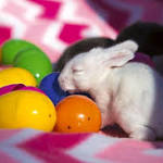 Curbing bunny buying and abandoning, Minnesota group offers rentals