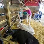 Pigs, cows and votes: Candidates try for farm cred