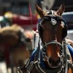Bill To Ban NYC Horse-Drawn Carriages Heading To City Council