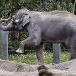 Elephants en route from Seattle to Oklahoma City make San Diego detour
