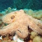 New Camouflage based on octopus skin can change color