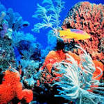 What Manganese and the Trade Winds Tell Researchers about the Coral ...