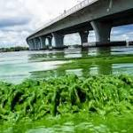 State Opens Loan Program for Algae Impacts