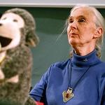 Parts of Jane Goodall's 'Seeds' Take from Other Works Without Giving Credit