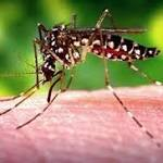 Despite its Zika-prone mosquitoes, why SC should escape an outbreak