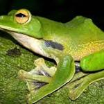367 New Species Discovered In Mekong River In Two Years