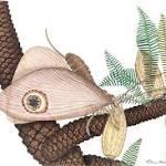 Jurassic 'butterflies' discovered, predating modern butterflies by 40 million years