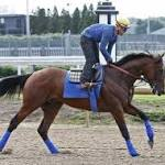 American Pharoah breezes beautifully in last timed workout before Belmont Stakes