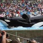 SeaWorld launches ad campaign after backlash from 'Blackfish'