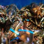 Maine lobstermen's union votes to buy Hancock County lobster business