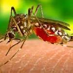 Here's how we can minimize collateral damage in the war against disease-carrying mosquitoes