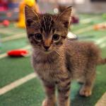 Kitten Bowl Coming to Hallmark Channel in 2014