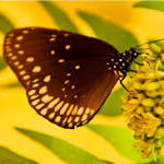 Declining Number Of Bees, Butterflies Threatens Global Food Supply: UN Report