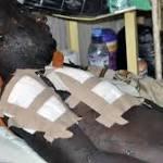 Boko Haram Captures Lassa Town in Borno