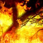 Wildfire burns across thousands of acres in Kansas, Oklahoma