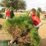 Farms offer option in hunt for Christmas trees