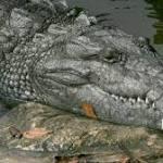 Florida man bitten by croc in suburban canal