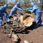 South Africa Sees Record Year for Rhino Poaching