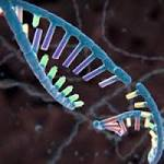 Novel Gene-editing technique capable of stopping progression of DMD