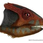 Scientists find new species of horned dinosaur