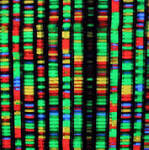 DNA'S Dynamic Nature Makes It The Blueprint For Life, New Study Finds