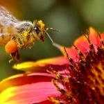 Not-so-sweet death: Critics call on Canada to ban pesticide linked to dwindling ...
