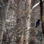 Lafayette: Bird watchers among hundreds in East Bay-wide Christmas Bird Count