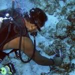 Caribbean Reefs Declining at an Alarming Rate: Report