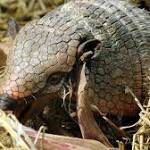 Georgia man kills armadillo, injures mother-in-law with one shot