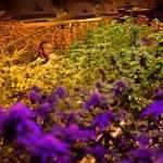 Colorado's marijuana tax revenue may be refunded