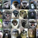 Diverse Faces Keep Guenon Monkeys From Interbreeding