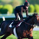 Kentucky Derby-winner Orb finishes workouts at Belmont and is now bound for ...