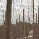 Hop growers look to new parts of US to slake thirst for crop