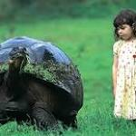 Galapagos Giant Tortoises Have Developed a Taste for Invasive Plants