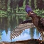 Researchers find the oldest ancestor of modern day birds in China