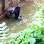 After Report, Family of Boy in Gorilla Pen Thanks Zoo Again