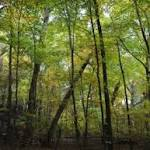 Harvard Study: Trees Use Less Water Amidst Higher Carbon Dioxide Levels
